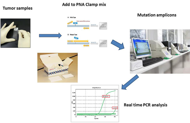 QClamp somatic mutation real time PCR  test