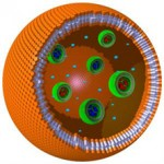 artificial polymer cell