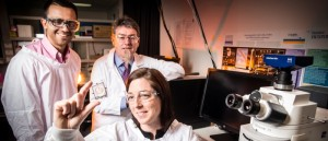 New research into creating brain 'tissue' in the lab