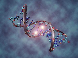 DNA_methylation